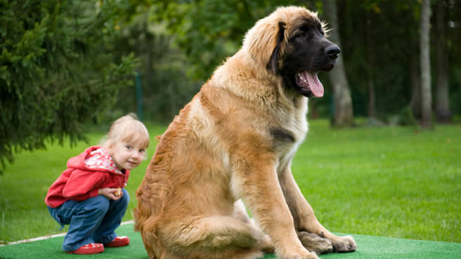 big dog and little baby