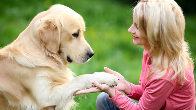 woman holding dogs paw