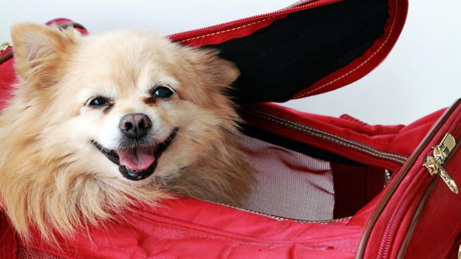 dog in carrier bag