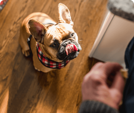 10 Things to Look for in a Pet Sitters